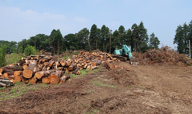水戸市伐採工事